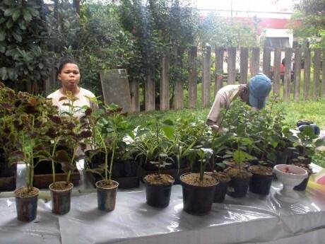 Jovens têm experiência em jardinagem desde agosto de 2007