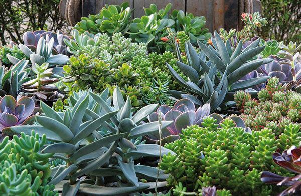 plantas toxicas jardim:Plantas, horta e mais