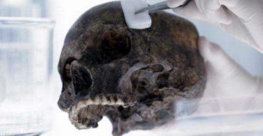 Museu da USP oferece cursos na área de Arqueologia e Etnologia