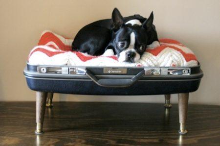 casa-cachorro-material reciclado-divulgação