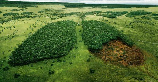 Time Lapse do Google mostra desmatamento da Amazônia e derretimento de geleiras