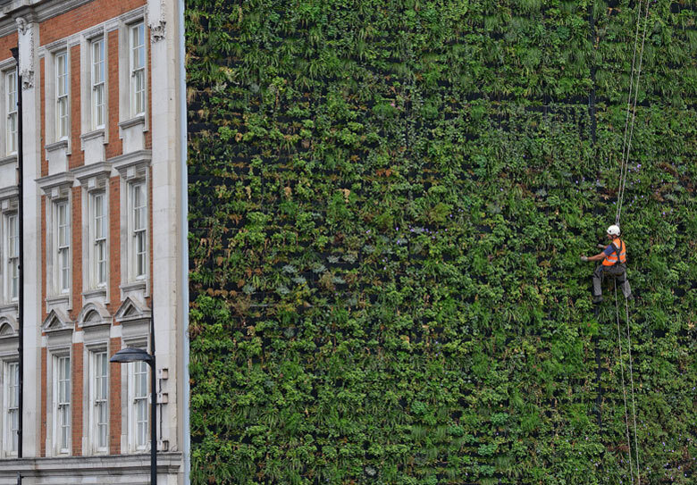 jardim vertical recife : jardim vertical recife:Living Green Wall Climbing Plants