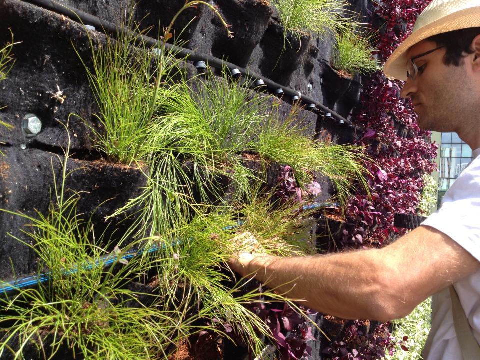 jardim vertical recife : jardim vertical recife: mostra como foi construído o jardim vertical ao lado do Minhocão