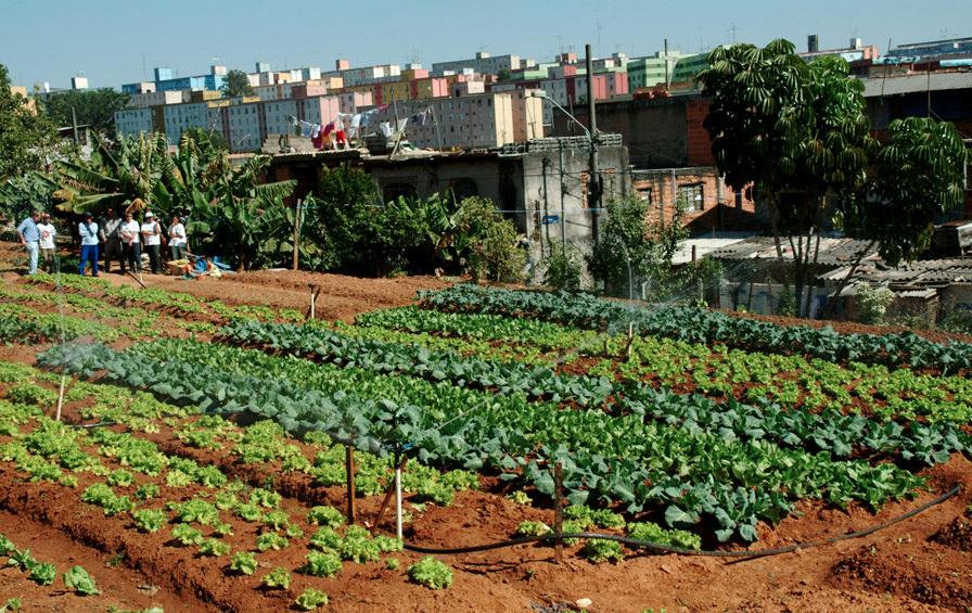 Top ONG Cidades Sem Fome desenvolve projetos de hortas urbanas em SP IC79