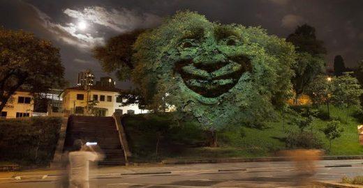 Conheça as árvores de SP que sorriem ou tossem de acordo com poluição