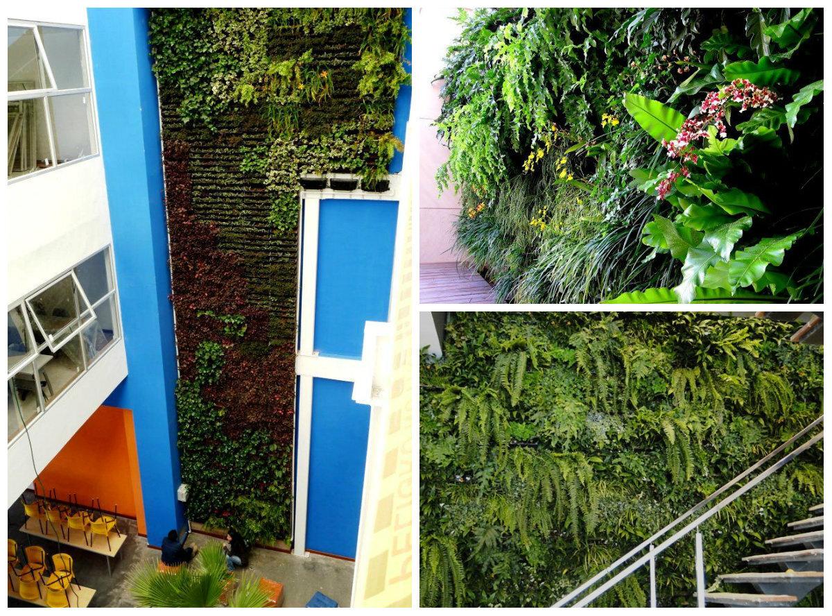 jardim vertical recife : jardim vertical recife:Kit permite a instalação de jardim vertical em casa
