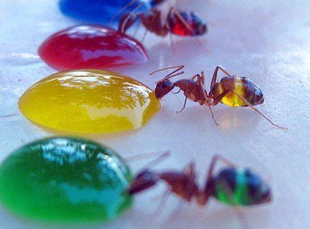 formigas-coloridas-2