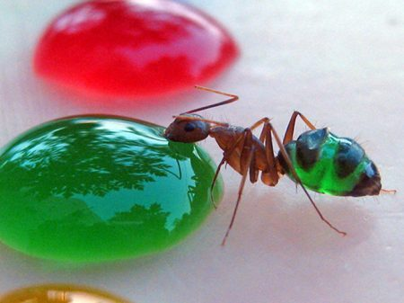 formigas-coloridas-3