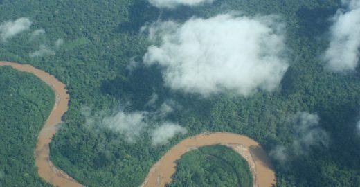 Experimento na Amazônia define futuro das florestas com o aquecimento global
