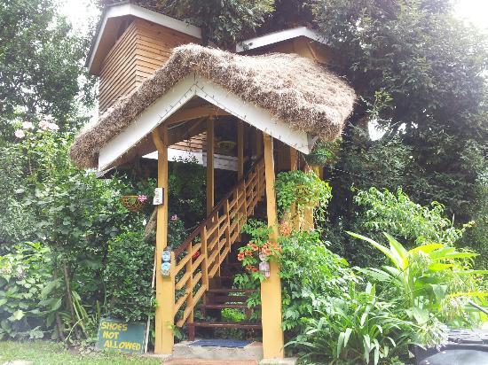 Tree House Resort Manali Manali Tree House Cottages