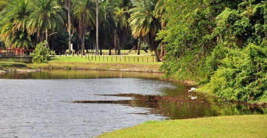 Projeto leva atividades físicas, teatro e música para o Bosque da Barra