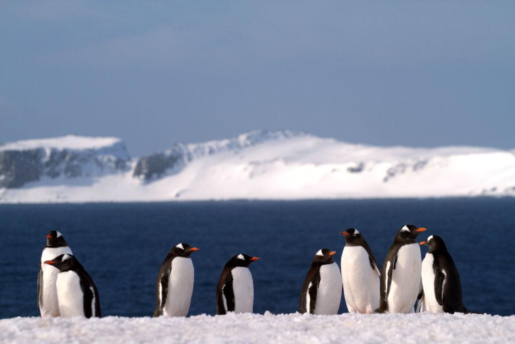 VISITAR UMA COLONIA DE PINGÜINS: Half Moon Island, na Península Antártica