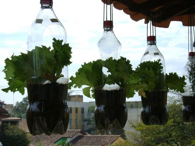 Resultado de imagem para garrafa pet horta