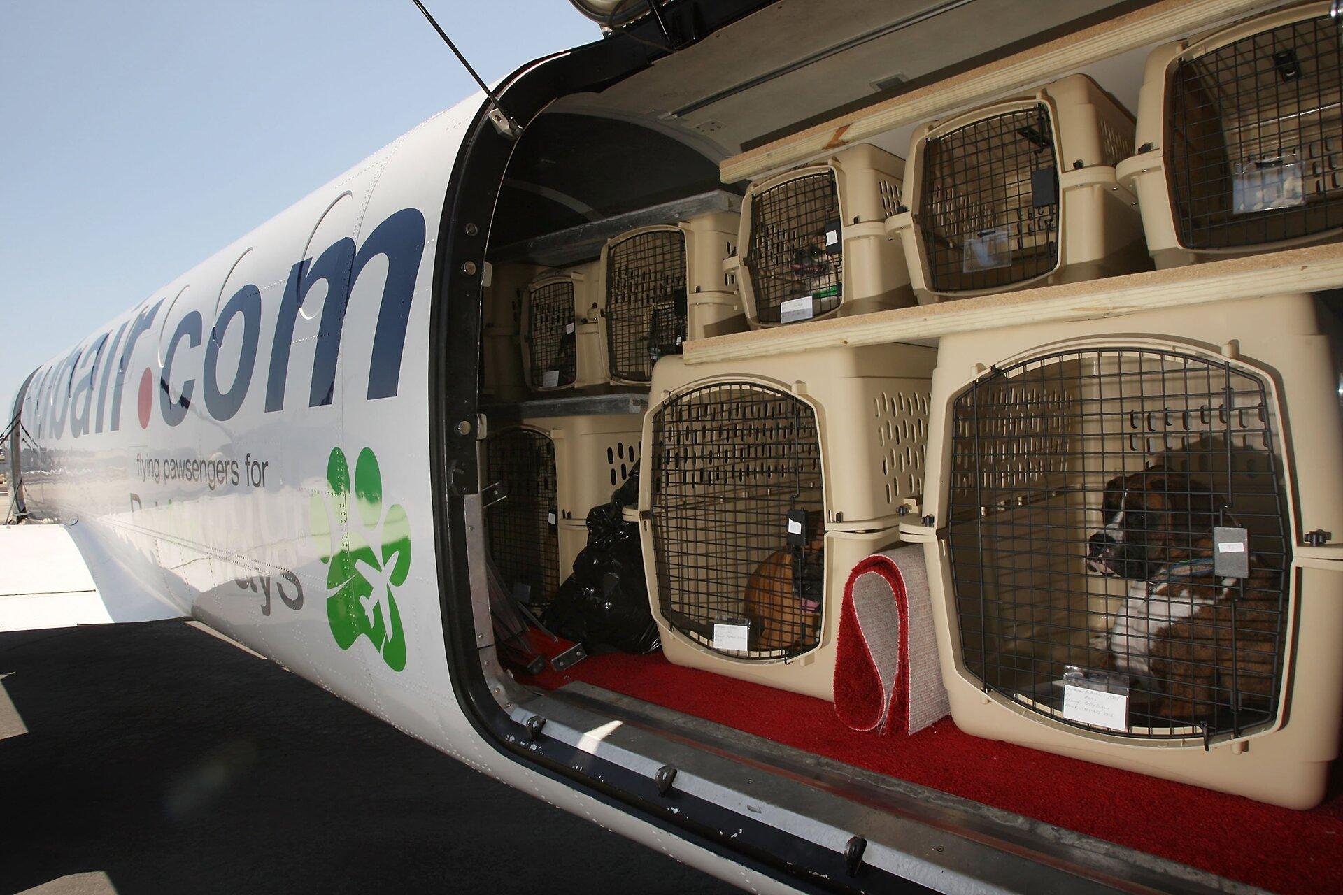 cachorros no bagageiro de um aviao