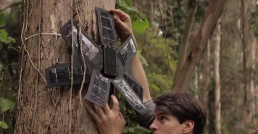Como alguns celulares velhos podem ajudar os índios a denunciarem o desmatamento na Amazônia