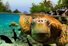 sea_turtle_-_Michele_Westmorland