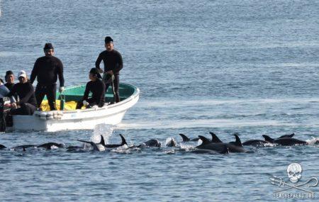 (Facebook/Sea Shepherd Cove Guardians)