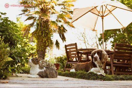 Foto: vidacigana.com