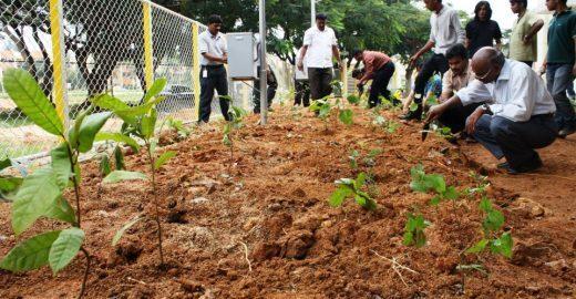 Indiano ensina como plantar uma floresta no espaço ocupado por 6 carros
