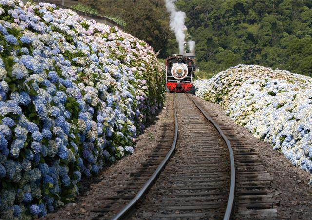 10 passeios de trem pelo Brasil
