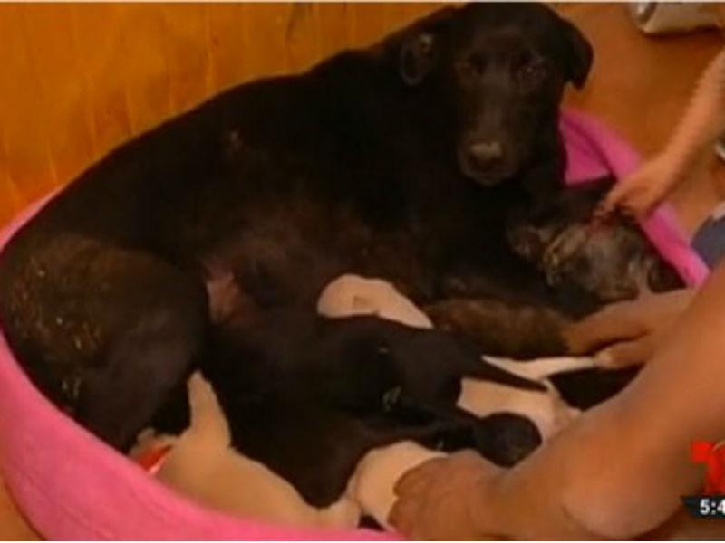 Cadela enterra seus nove filhotes para salvá-los de incêndio