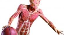 o_fantastico_corpo_humano-2