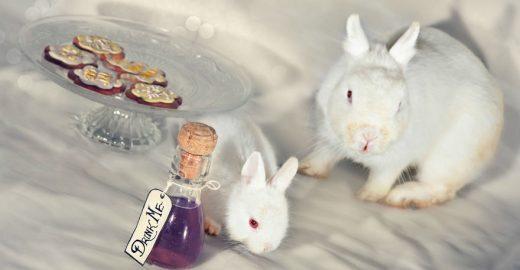 Animais resgatados de laboratórios participam de ensaio sobre Alice no País das Maravilhas