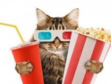 Cinema_Gato