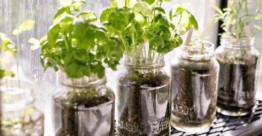 Aprenda a fazer mini hortas utilizando garrafas e potes de vidro