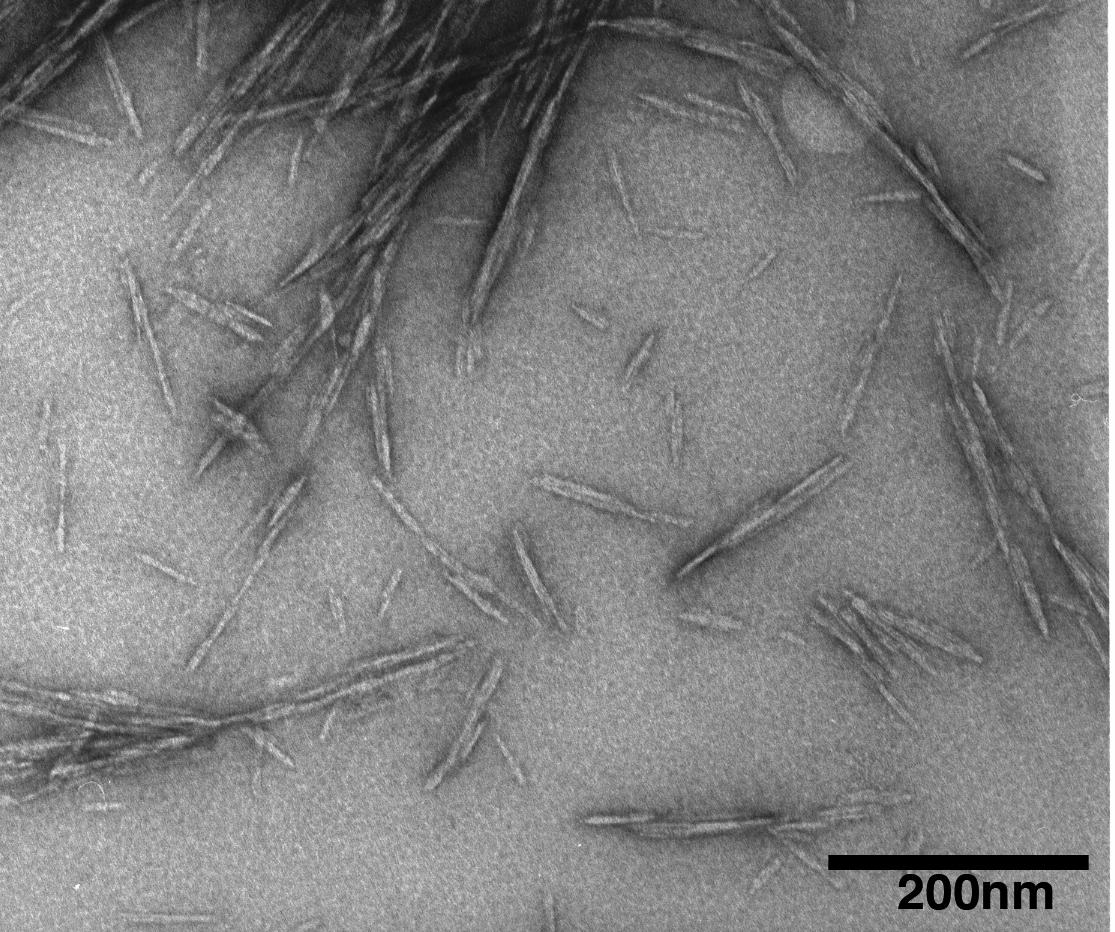 Nanocristais_de_celulose
