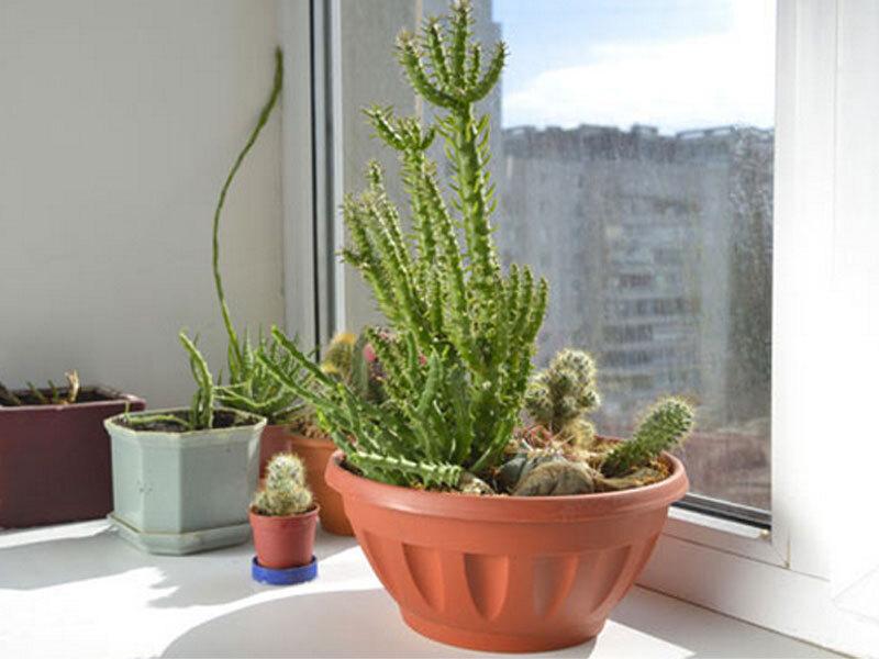 Plantas podem purificar os ambientes da casa; veja lista