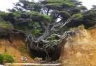 plantadoresarvores_projeto