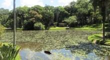 Lago do Jardim Botânico - Foto: Patrícia Ribeiro/Passeios Baratos SP