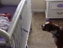 boxer_and_baby