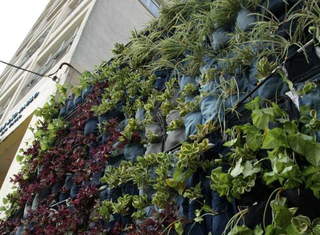 jardim vertical recife : jardim vertical recife:Projeto cria primeiro jardim vertical com calça jeans