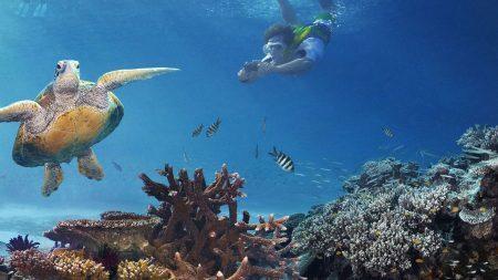 Snorkel na Great Barrier Reef | foto: etravelblog.com