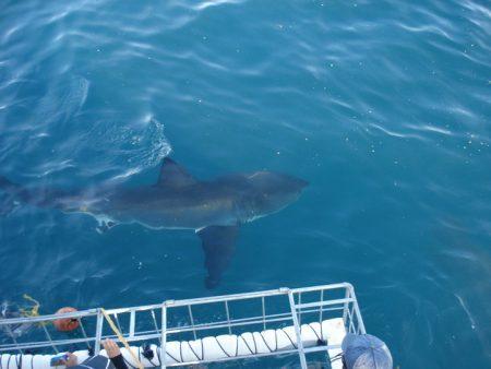 Um pouco antes do mergulho com tubarão branco… MEDO!!!