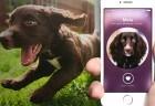 au-dote-aplicativo-cachorros-abandonados