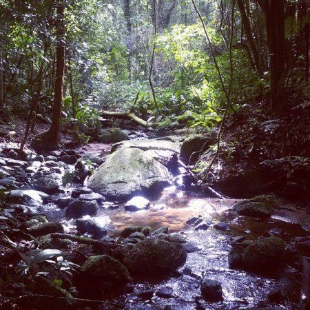 Núcleo Engordador - Parque da Cantareira