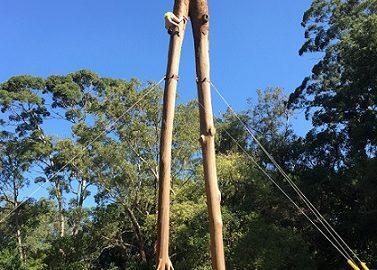 Com intervenção no Ibirapuera, projeto chama atenção para árvores caídas em SP