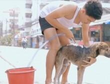 banho_cachorro