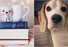 insta_livros_capa