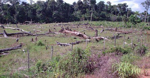 ONG registra aumento no desmatamento da Amazônia