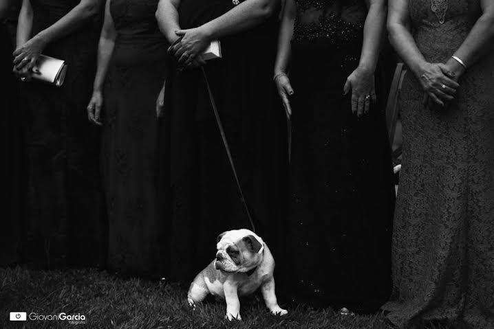 Cachorros de diferentes raças e tamanhos e compõe as fotos do book do casamento ou na própria cerimônia (imagem: Giovani Garcia)
