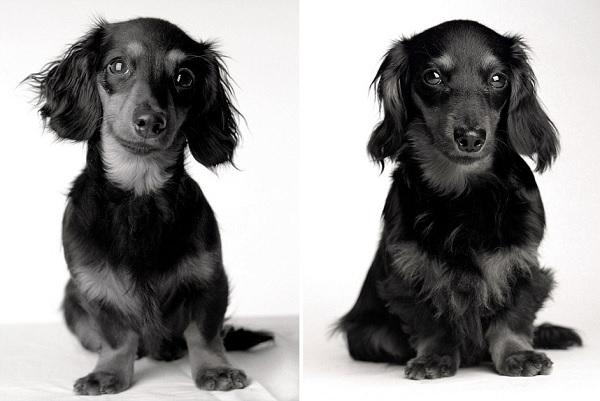 Lily, a cadela da fotógrafa, aos oito meses e aos dois anos (Divulgação/Amanda Jones)
