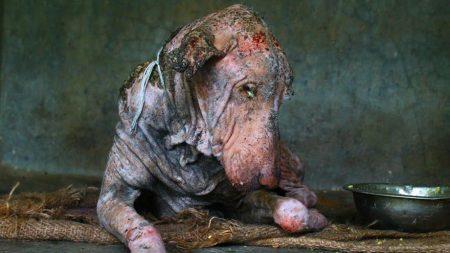 Reprodução/Animal Aid Unlimited