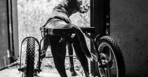 Donos arrecadam fundos para ajudar cachorra com doença rara