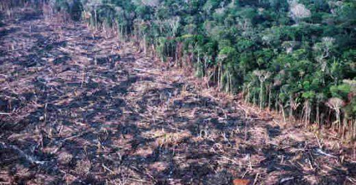 Série retrata impactos socioambientais causados pelo desmatamento na Amazônia