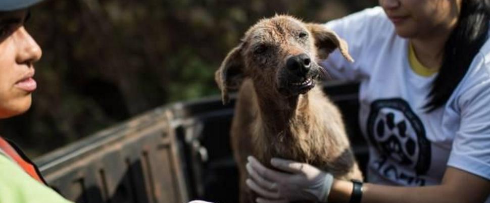 Saiba como ajudar os animais vítimas do rompimento da barragem em Mariana