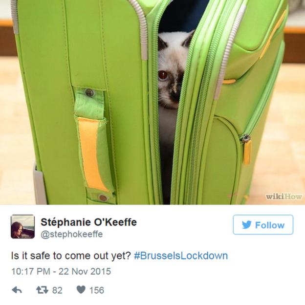 Diante de ameaça de terrorismo, belgas respondem com fotos de gatos